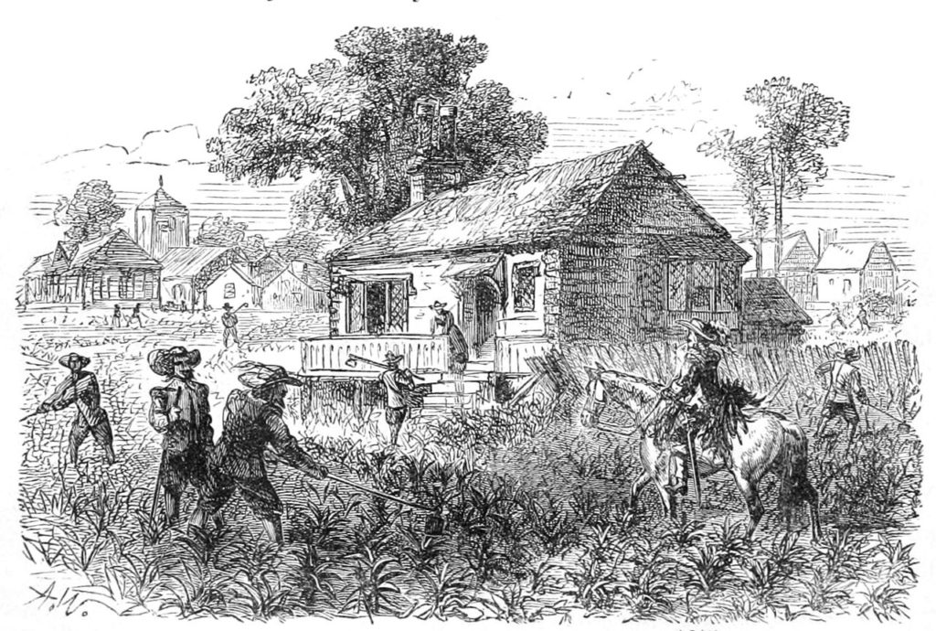 Cultivation of tobacco at Jamestown 1615, America's aristocracy